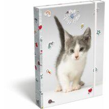 FÜZETBOX A4 LIZZY19 Pet (Fluff Kitten, 19628513)