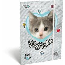 GUMIS DOSSZIÉ A5 LIZZY19 PET (Fluff Kitten, 19670513)